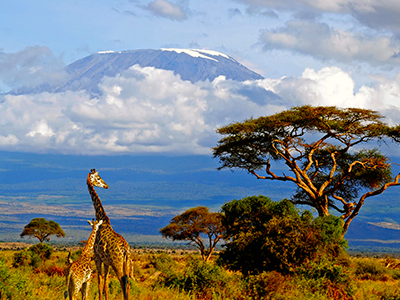 Kilimanjaro Flight Price £450